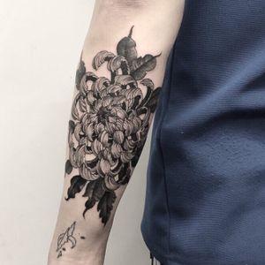 Chrysanthemum on his forearm - back side. #blackwork #blackandgrey #chrysanthemum #linework #flower #nature #forearm #illson