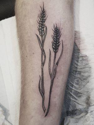 Wheat, forearm