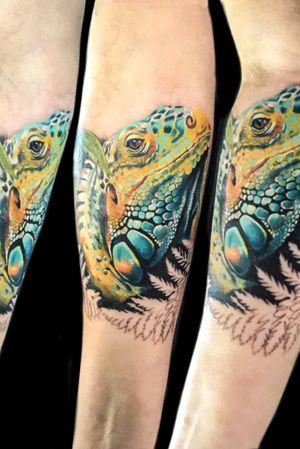 Iguana full color