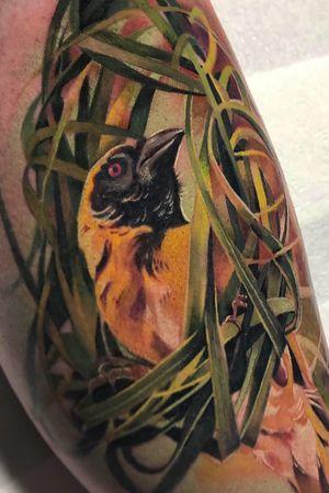Completed this african weaver bird building a nest 🧡 Really enjoyed doing this one. Pretty challenging (spent 75% of the time on the leaves 😅) Using @yayofamilia aftercare @eternalink @cheyenne_tattooequipment @barber_dts #tattoo_awards #tattoolifemagazine #inkably #tattoodo #tattoodoapp #tattoodotcom #theartoftattoing #realism #realistictattoo #tattoolovers #inked #inkjunkeyz #inkstagram #tattoo2me #londontattoo #bestitaliantattooartist #tatuaggio #tatuaje #bird #birdtattoo #african #legtattoo #girlswithtattoos #inkedup #tribe #tribetattoo #naturetattoo