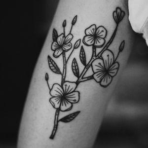 Sakura branch 🌸🌸🌸 — #drawing #linework #dotwork #tattoo #tattooart #tattooflash #traditionaltattoo #montrealtattooartist #quebectattooartist #art #darkart #darktattoo #darkartist #darkartists #blackwork #bw #illustration #montrealtattoo #blackandwhite #montreal #artwork #illustrationart #canadatattoo #flashaddicted #blacktattooart #tttism #btattooing #onlythedarkest #onlyblackart