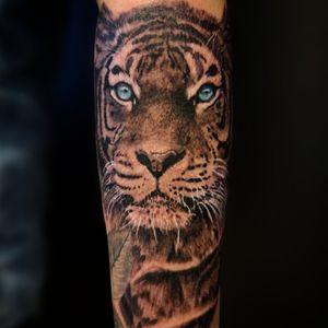 Tiger lower arm