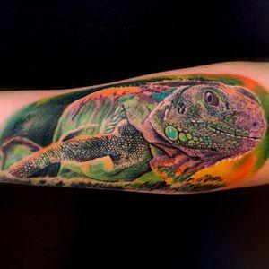 Iguana lower arm