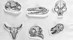 #skull #skulltattoo #animalskull
