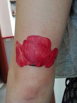 #poppy #papavero #flower #redflower #realism #realistic #color