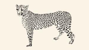 cheetah blackwork fineline realizm