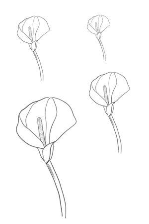 Calla Lily flower fineline dotwork