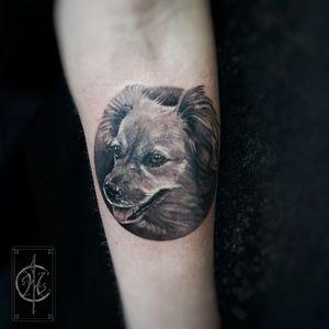 Memorial tattoo of a beloved dog #realism #realistictattoo #dogportrait #portrait #tattooart #doglover #family #love