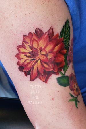 Color realism dahlia flower