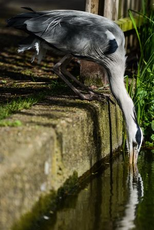 #heron #reflection unknown photographer