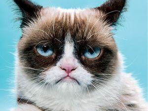 Tardar Sauce aka Grumpy Cat for New York Magazine #TardarSauce #GrumpyCat #cat #kitty #petportrait #GrumpyCattattoos #GrumpyCattattoo #cattattoo #meme #petportraittattoo #funnytattoo
