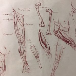 Anatomy study. #muscle #anatomystudy #drawing #figurestudy #fineartist