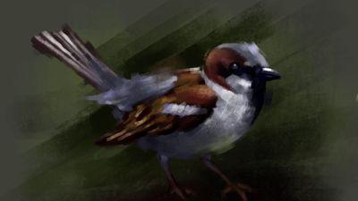 Memories of childhood. #sparrow #digitalpainting #digitalartist #digitalart #fineartist #oilpainting #oilpainter