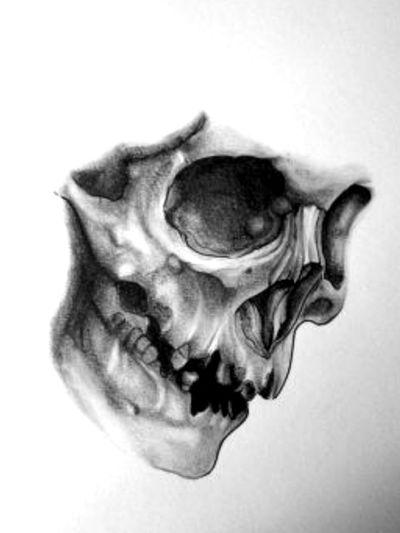 #schädel #realistic #real #tattoo #vorlage #stencil #aschram#ganesha ##lines #blackandgrey #follower #rücken#frau #inkwoman #germantattooer #instagood #tattoodo#tattoodoambassasor #Totenkopf #artist #inkedwoman