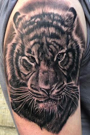 Tiger day! 🐯