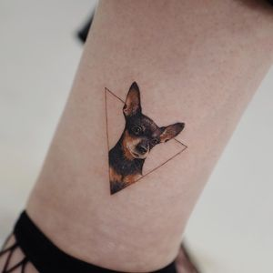 Dog tattoo by Sol Tattoo #SolTattoo #Chihuahua #realism #realistic #triangle #ankle #lowerleg #leg #color #dogtattoos #dog #dogs #petportrait #animal #bff #pet #canine