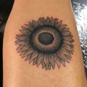 Girasol Sunflower