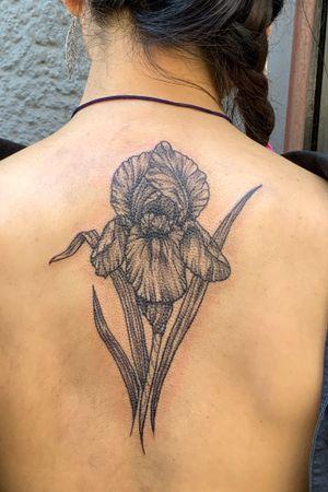 #iris#lilie#schwertlilie#blackandgray#linework#flower#flowertattoo#whipshading#stippleshading#backtattoo#blumentattoo#rückentattoo#berlin#berlinartist#tattooartistberlin#friedrichshain