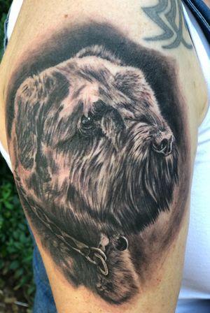 Dog Portrait!! 😁 #melfortat #greenpearltattoo #braunschweigtattoo #dermalizepro #silverbackink #inkjecta #dankubin #hustlebutter #tattoo #tattoos #tttism #ink #inked #bnginksociety #tattoolife #tattoolovers #inkstagram #blackandgreyrealism #tattoooftheday #Braunschweig #hannovertattoo