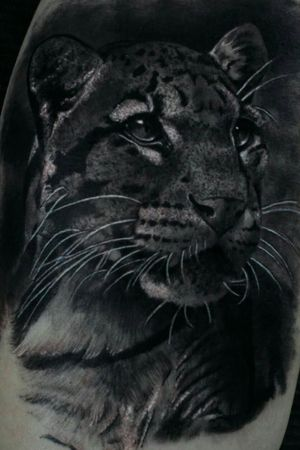 Leopard Black and Grey Tattoo... #leopardtattoo #leopard #blackandgreytattoo #blackandgrey #tatuaggiorealistico #tattooart #tattooblackandgrey #tatuaggio #inked #ink #realtattoo #animaltattoo #killerink