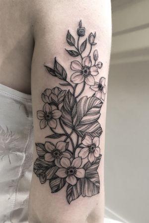 Some fine line flowers
