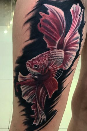 Custom tattooing #betafish #fishtattoo #tattoo #tattoos #ink #inked #colortattoo #balitattoo