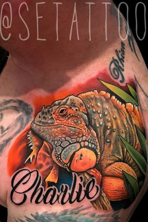 Charlie the iguana