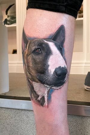 Daisy the English Bull Terrier