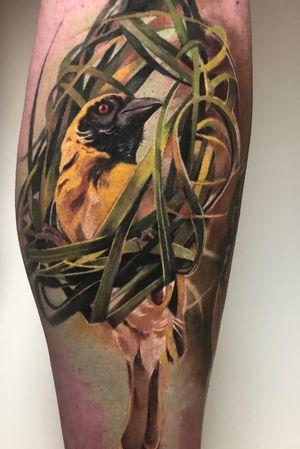 Healed and settled. Using @yayofamilia aftercare. #tattoodo #clotoacherontia #birdtattoo #colourtattoo #realism #healedtattoo