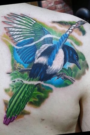 Nice colour magpie