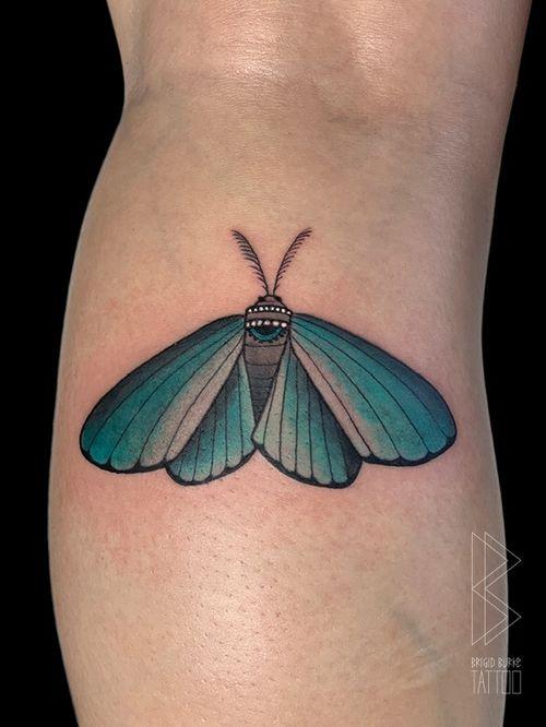 Ornamental Moth from my flash