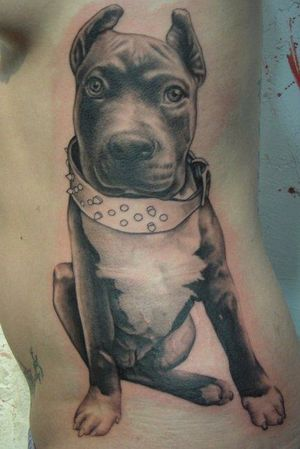 Pitbull puppy portrait