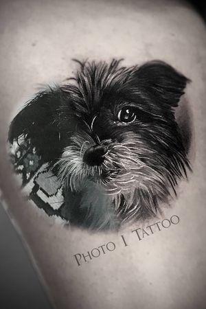 #dog #dogportrait #realistic #realism #marco #pik #ass #marcopikass #pikass #pikasstattoo #tattoo #ketsch #mannheim #heidelberg #german #germany #art #bng #blackandgrey