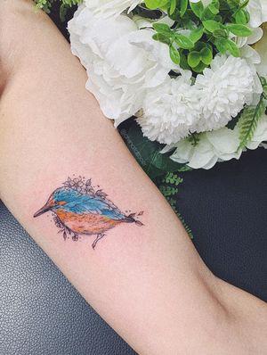Kingfisher cutie x