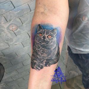 Cat tattoo #alexkonti #tattoosketch #watercolor #watercolortattoo #gdansk #gdynia #gdańsk #sopot #trojmiasto #tatuaz #cat