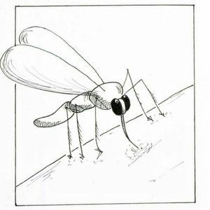 Wannado . #mücke #mückenstich #tattoo #Wannado #wannadotattoo #sketchy #minimalism #illustration #sommer #insekten #nature #naturetattoo #fineline #finelinetattoo #ink #hamburg #tattooapprentice #kunst #skizze #animaltattoo #tiere