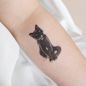 Cat tattoo by Jia aka Paw Tattoo #Jia #PawTattoo #cattattoos #cattattoo #cat #kitty #cute #animal #petportrait #pet #arm #realism #realistic #hyperrealism #color