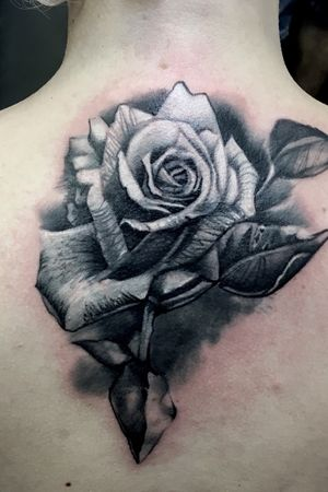 Realistic rose black and gray