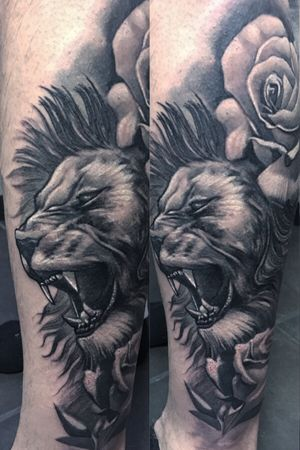 Lion black and gray