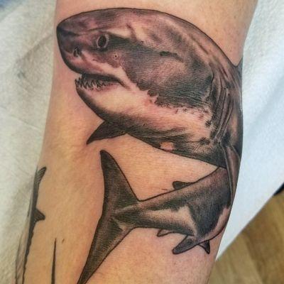 #Shark #swimming #greatwhite #blackandgrey
