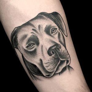 #dogportrait #whipshaded #oldschooldog #blackandgrey