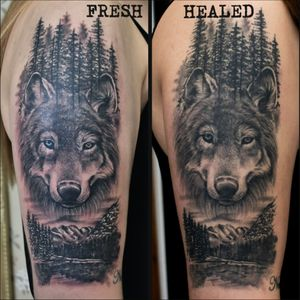 I finally get photo of wolf I've done few months ago 🥰 Fresh vs fully healed 😍 #dktattoos #dagmara #kokocinska #coventry #coventrytattoo #coventrytattooartist #coventrytattoostudio #emeraldink #emeraldinkltd #dagmarakokocinska #wolf #wolftattoo #tattoo #tattoos #tattooideas #tatt #tattooist #tattooshop #tattooedgirl #tattooforgirls #killerbee #immortalinnovations #sabre #pantheraink #realistictattoo #blackandgraytattoo