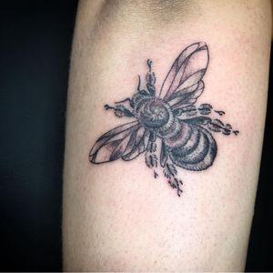 Fine line bumblebee
