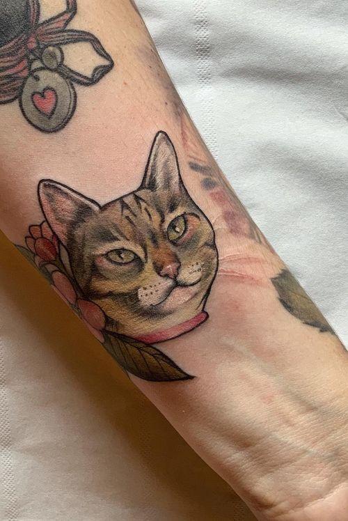 Mini cat portrait