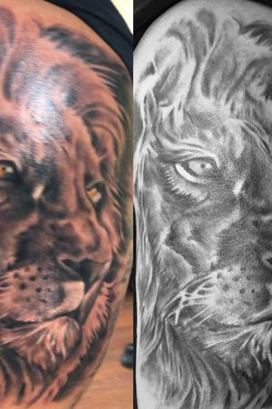 Black and gray lion!!!