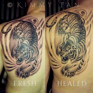 Fresh vs healed tiger tattoo by Kimmy Tan. Oldie but goodie 2015
