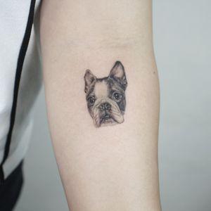 all with singleneedle #puppy #dogtatoo #dog #puppytattoo #BostonTerrier #realistictattoo #tinytattoo #microtattoo #nyctattoo #newyorktattoo #tattooartist