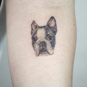 micro puppy tattoo all with singleneedle #puppy #puppytattoo #dog #dogtattoo #animaltattoo #microtattoo #nyctattoo #nyc #smalltattoo #minitattoo#bostonterrier #cutetattoo