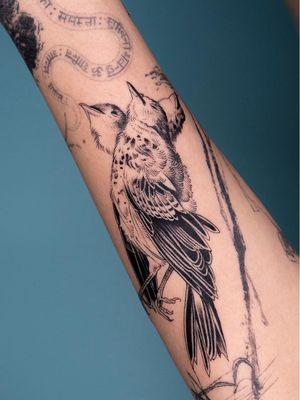 Bird tattoo by Oozy #Oozy #birdtattoos #birdtattoo #bird #feathers #wings #flying #tattooidea #illustrative #linework #fineline