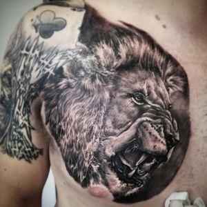 Super realistic lion head done on the chest in Okinawa Japan at the Shop Okinawa #lion #lionhead #lionking #liontattoo #chesttattoo #chestpiece #tattoo #tattoodo #ink #realism #realistictattoo #awesome #awesometattoos #bng #blackandgrey#superbtattoos